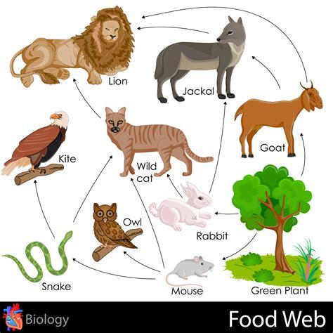 food websites food web kidspressmagazine