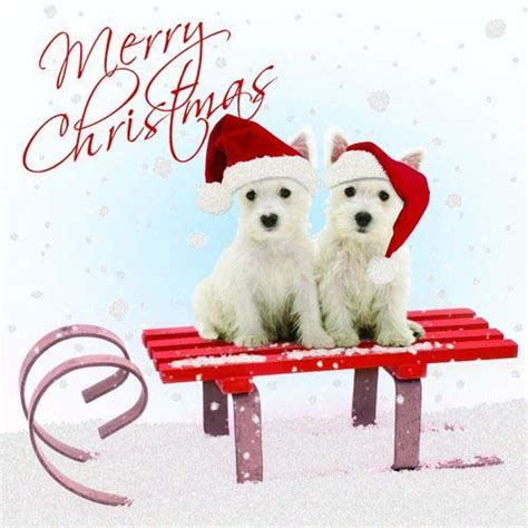 wann weihnachtskarten verschicken weihnachtskarte winter westie
