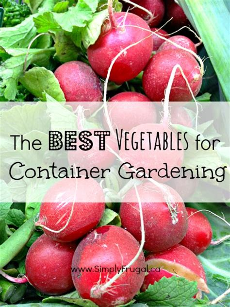 best vegetables for container gardens the best vegetables for container gardening