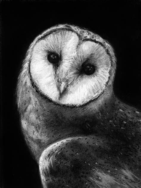 Barn Owl Face Drawing Barn Owl Drawing