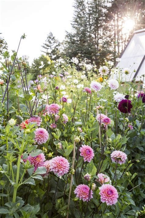 11 best images about dahlias on soil type