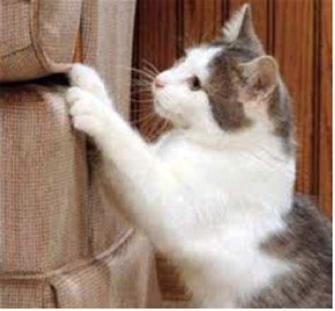 Cat Scratch Proof cat scratch resistant upholstery fabric