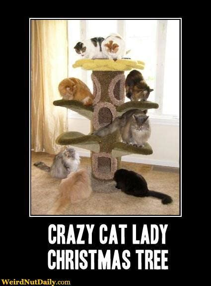 Crazy Cat Lady Meme - crazy cat lady christmas tree meme generator captionator