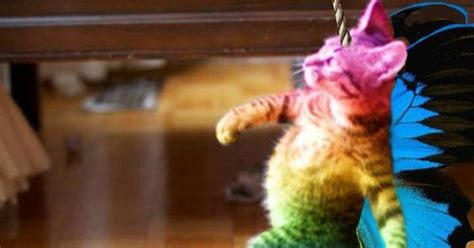 Cat Rainbow Meme - rainbow butterfly kitty showing gallery for rainbow