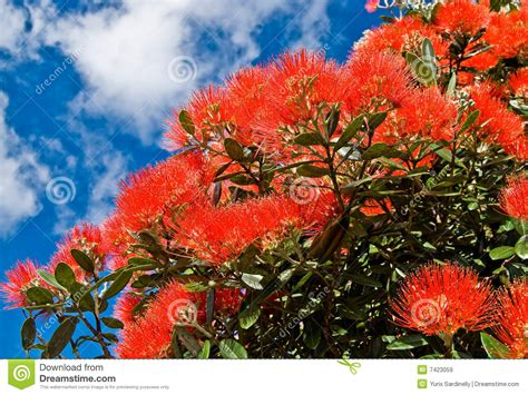 christmas tree flowers royalty free stock images image