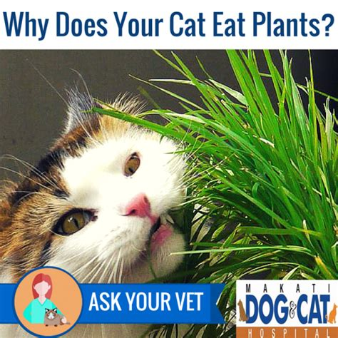 why does my eat cat why does your cat eat plants