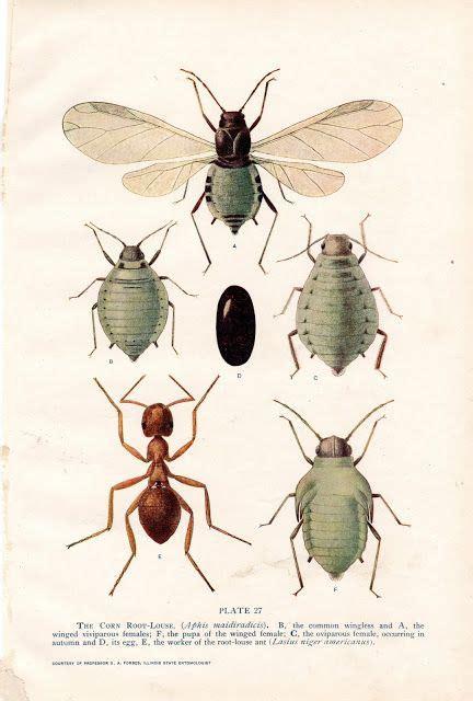 imágenes de animales insectívoros 25 b 228 sta id 233 erna om imagenes de insectos p 229 pinterest