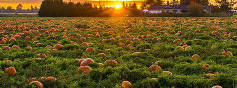 pumpkin patches  corn mazes  salem  acura