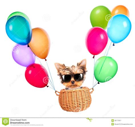 puppy balloons yorkie clipart clipart suggest