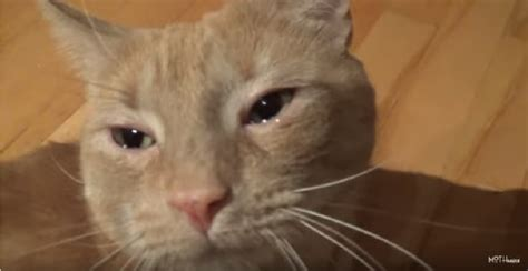 can cats cry 28 images this cat is crying with tears on her eyes buzzed why does my cat