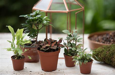 moss terrarium supplies solidaria garden