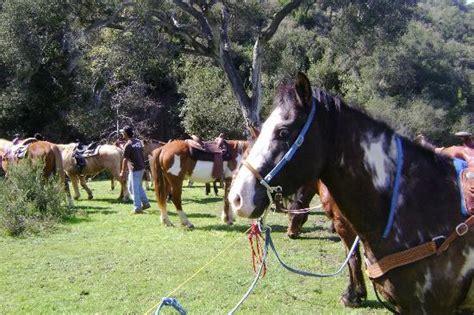 baja rescue hello rocket picture of all the pretty horses of baja rescue and rides rosarito