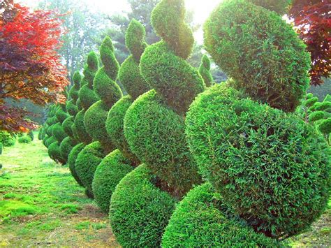 thuja gardens