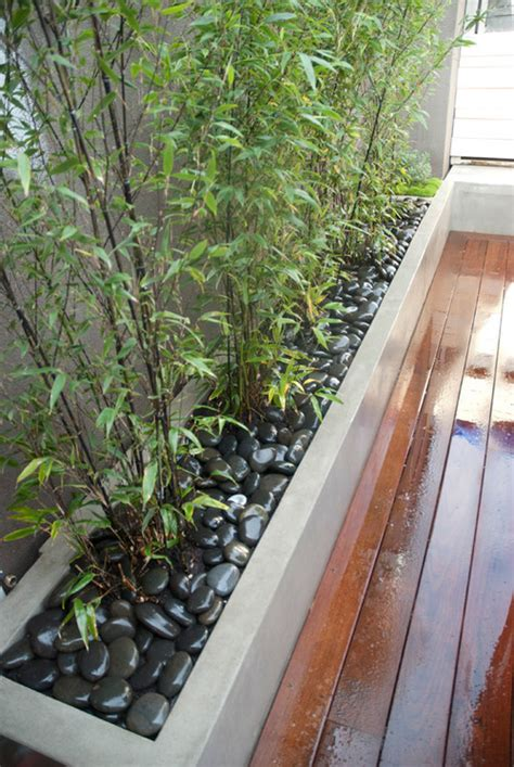 Bamboo Planter Ideas by Bamboo Landscaping Guide Design Ideas Pro Tips