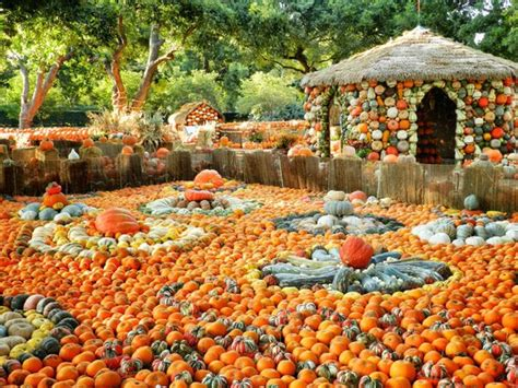 flower garden in dallas pumpkin autumn at the arboretum picture of