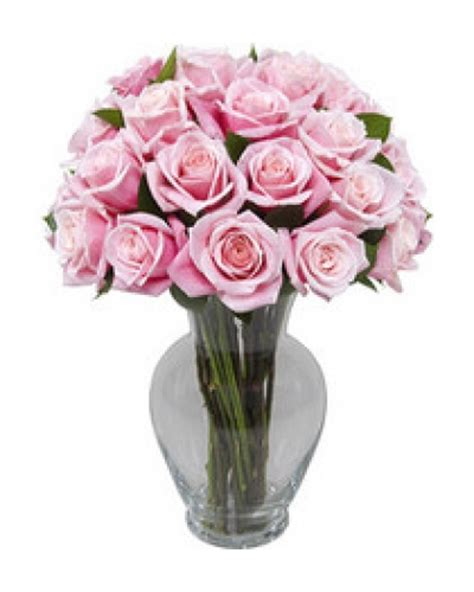 Vase Of Pink Roses by 25 Pink Roses With Free Vase