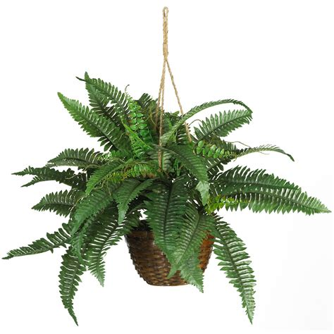 hanging plant 18 inch boston fern in hanging basket 6599