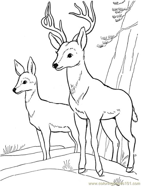 coloring pages of mule deer deer head colring pages coloring pages