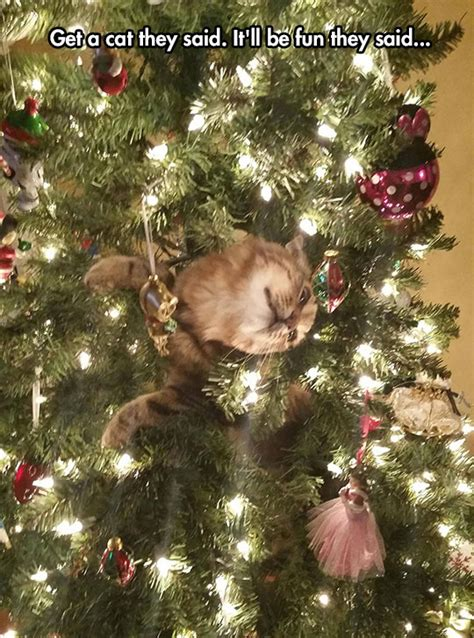 funny cats in christmas trees that ornament looks strange the meta picture