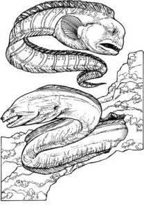 wolf eel and green moray eel coloring page supercoloring com