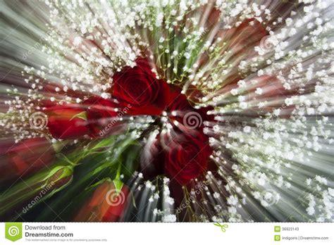 imagenes de rosas en movimiento 3d rosas rojas de la falta de definici 243 n de movimiento imagen