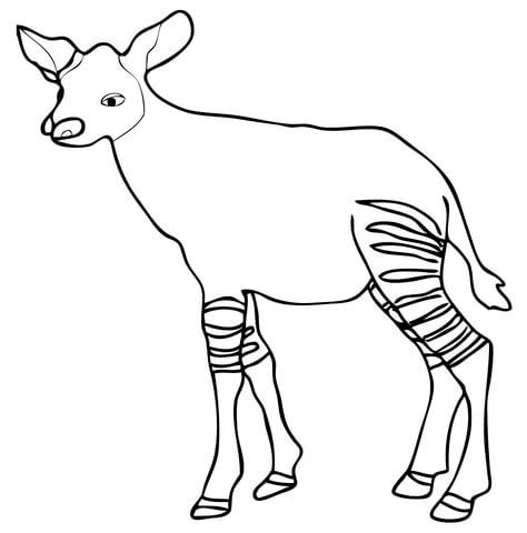 coloring pages of baby calf baby calf coloring pages www pixshark com images