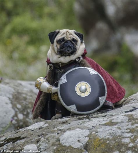 pug of the rings pug costumes for humans images