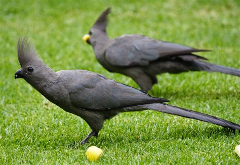 grey wallpaper with birds on grey go away bird photos and wallpapers collection of the