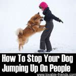 how to your not to jump on visitors lovable dogs how to your to greet visitors calmly lovable dogs