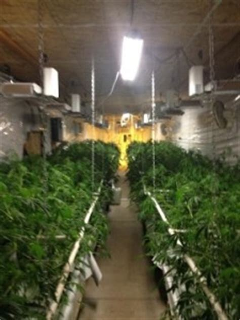 Shasta County Warrant Search Cops Raid Northern California Marijuana Farm California Marijuana Market
