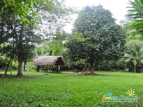 jaguar belize the of cockscomb basin wildlife sanctuary and