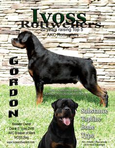 ivoss rottweilers der faultline rottweilers chip ditto newburn tennessee chipditto gmail 731