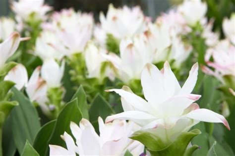 fiore perenne piante perenni pollicegreen