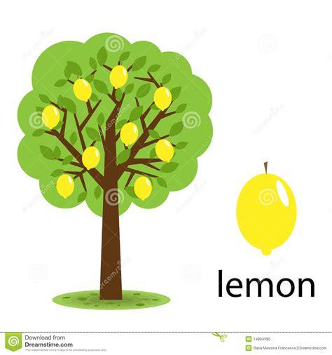 testo lemon tree albero di limone fotografia stock immagine 14894390