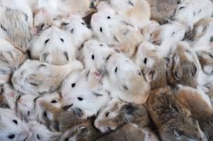 Hamsters cute pets we love