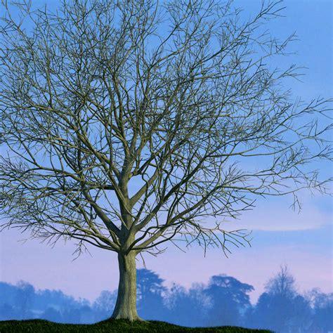 winter tree the foundry community forums winter tree