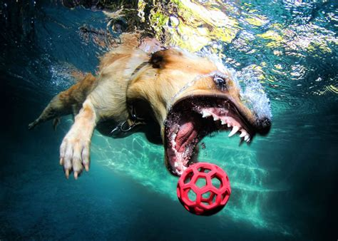 puppies underwater stunning photography 49 seth casteel s underwater dogs