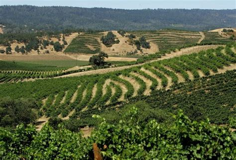 friendly wineries best friendly wineries in sonoma county axs