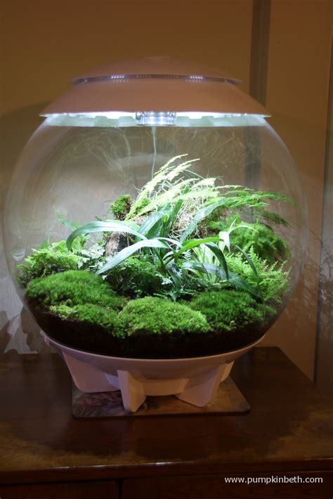 planting list for biorbair and traditional terrariums