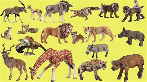 imagenes de animales salvajes para niños sonidos de animales salvajes para ni 241 os de preescolar