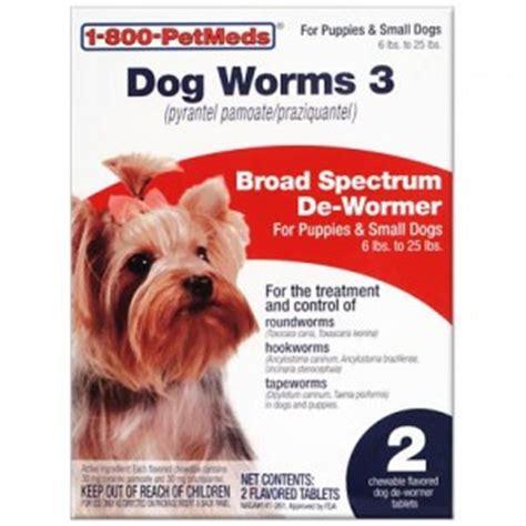puppy worm treatment intestinal parasites awareness is key petmeds pet health