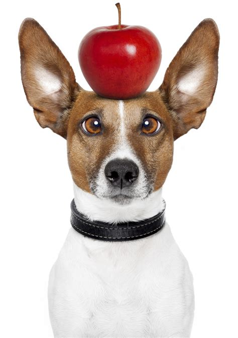 dogs and apples apple related keywords suggestions apple keywords