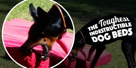 most durable dog bed 5 really indestructible dog beds the kong dog bed