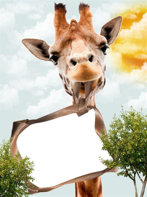 imagenes en png de animales 4 marcos de fotos de animales marcos gratis para
