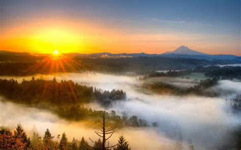 sunrise fog field tree background  wallpaperscom