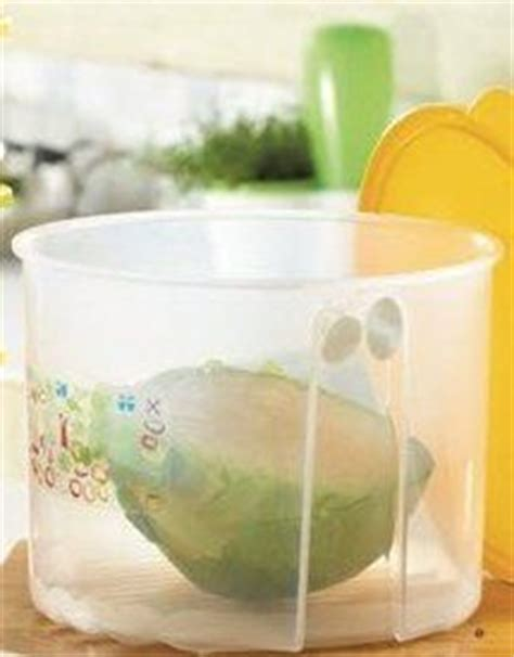 Tupperware Large Summer Fresh Kotak 1000 images about smart summer snacking on tupperware fruits and vegetables and