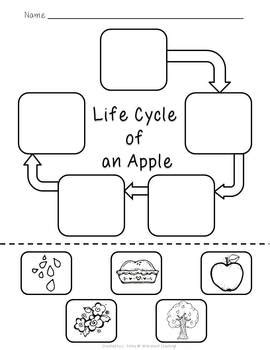 life cycle of an apple freebie by wild about teaching tpt