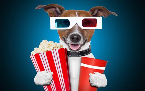 popcorn and dogs with popcorn and goggles wear beautiful hd wallpaper