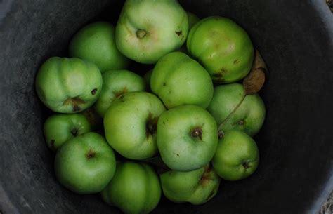green apple great english 8853004231 british apple varieties great british chefs