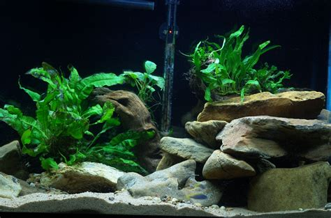 Cichlids Com Aquascape In My 55 Gallon Mbuna Tank